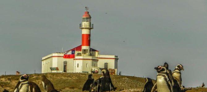 Punta Arenas: Isla Magdalena (pinguinera) e Isla Marta (leão marinho)