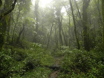 Monte Verde – Minas Gerais