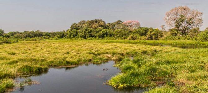 Pantanal – Fazenda Santa Clara – Brasil