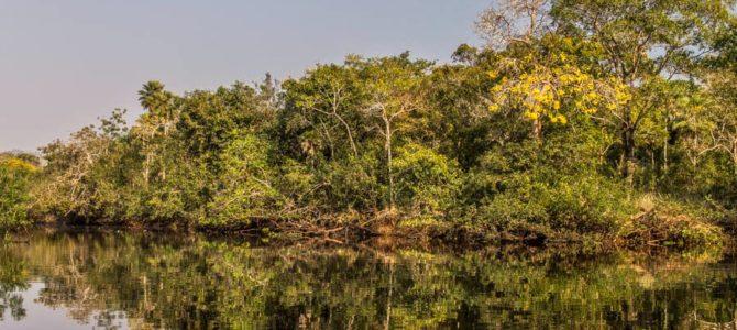 Pantanal – passeio de barco no rio Abobral e Camping em Nhecolândia, Brasil