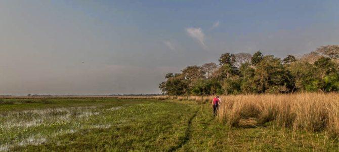 Acampamento selvagem em Nhecolândia no Pantanal, Brasil