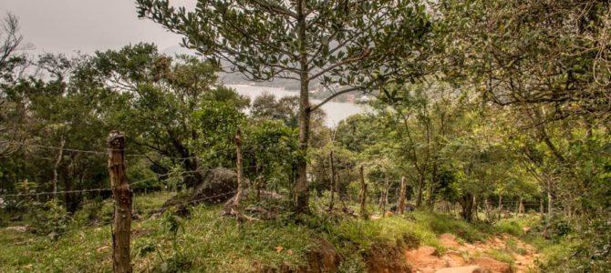 Florianópolis: Trilha Praia dos Naufragados